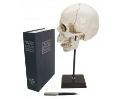 декоративный человеческий череп (макет) 35 см